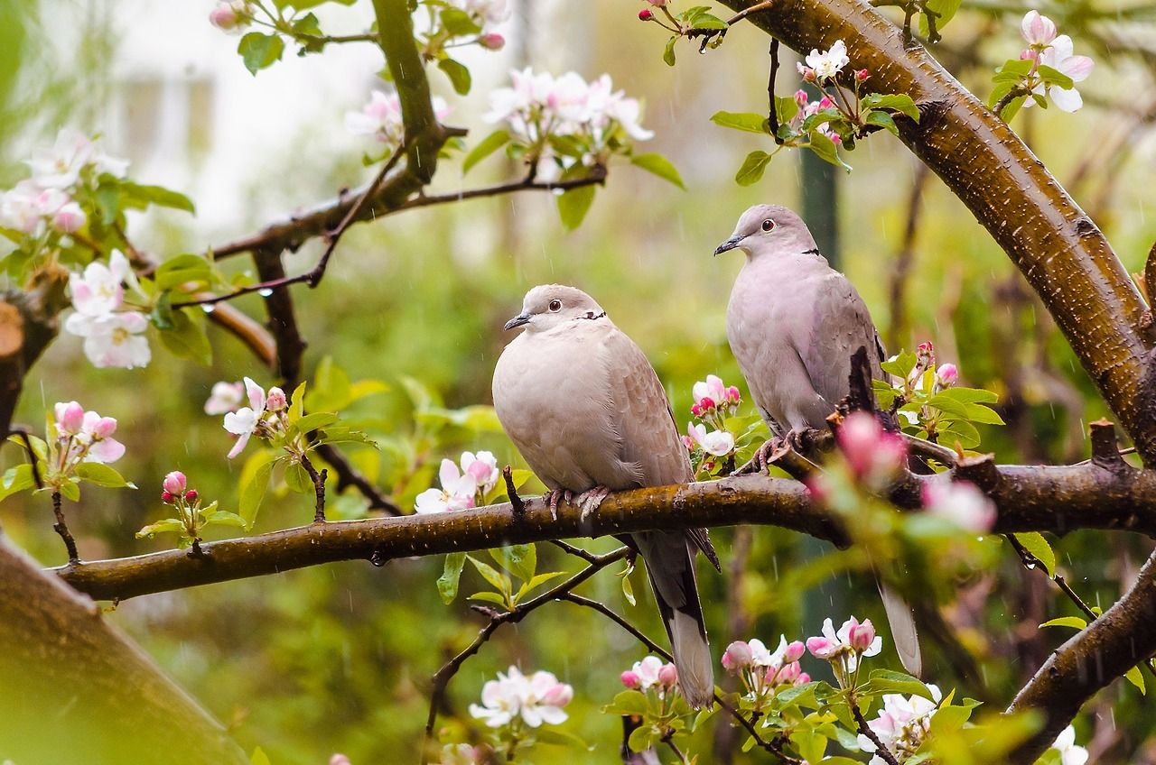 "silvaris:  "" Spring rain by Stefan Marin  """