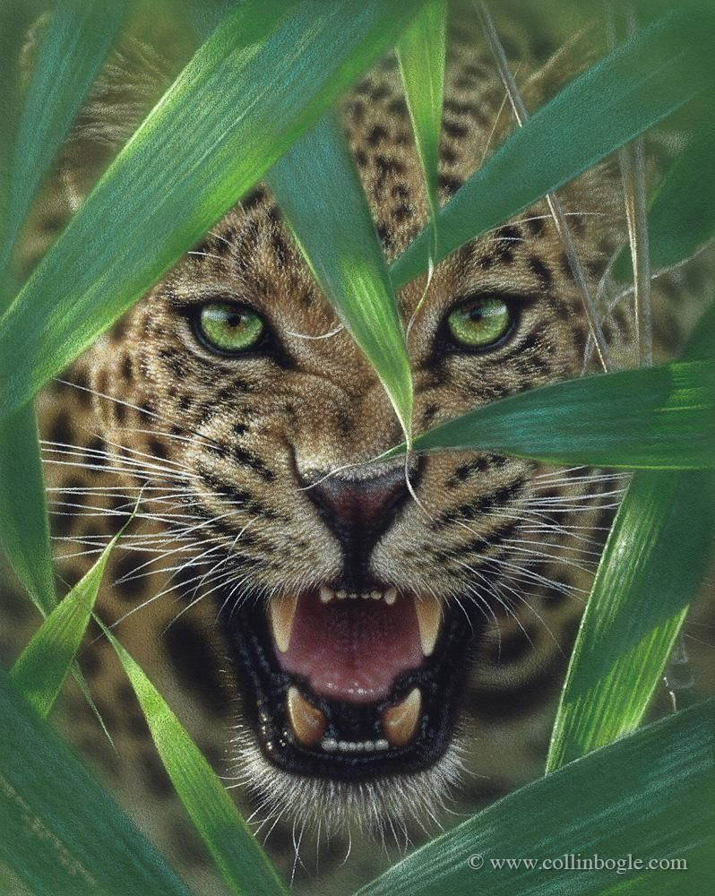 Ambush – Jaguar