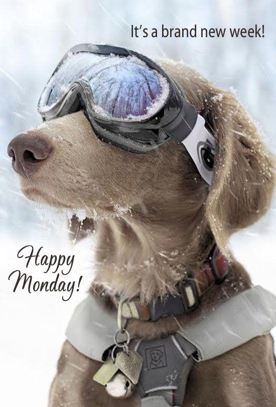 Resultado de imagen de happy new week dog
