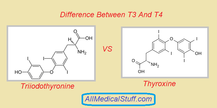 Differences Between T3 And T4 Different Medical Thyroid Hormone