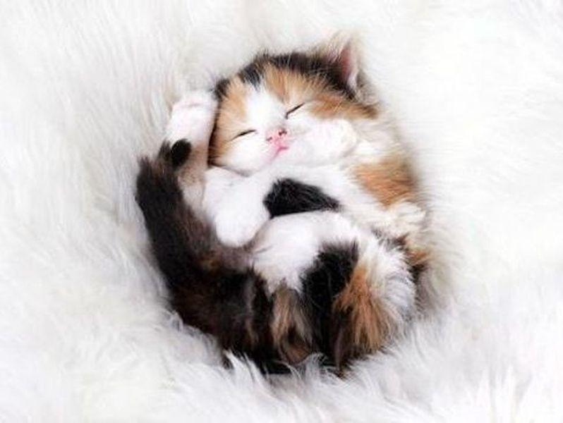 Photo of Diez gatos que prefieren dormir boca arriba