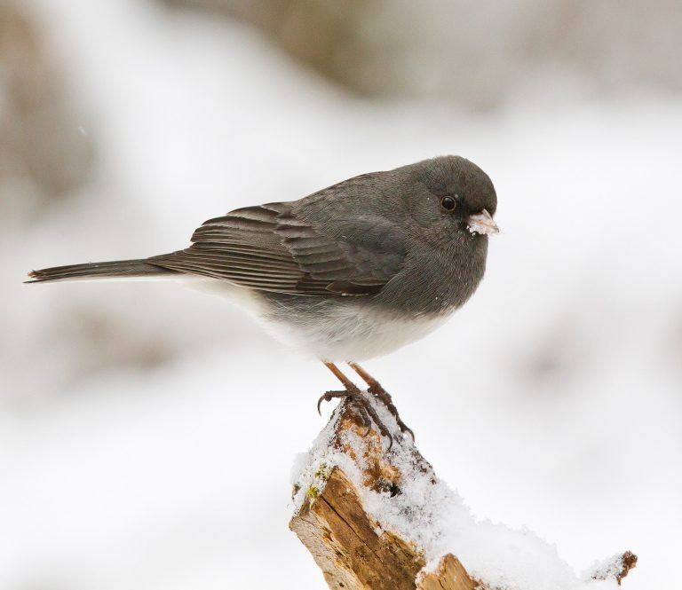 Types Of Winter Birds To Look For In Your Backyard in 2020 ...
