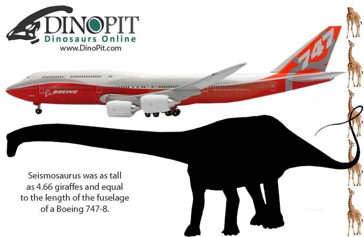 How big was Seismosaurus? Check out today's post on http://www.dinopit.com