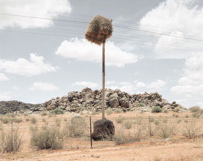 South African photographer, Dillon Marsh, has taken a series of photographs of nests. Nests? I hear you ask. That's right, nests. But no ordinary bowl-lookalike nests that are found in trees. These nests are the homes of Social Weaver Birds, and are usually found wrapped around telephone poles in the land of nowhere, which you […]