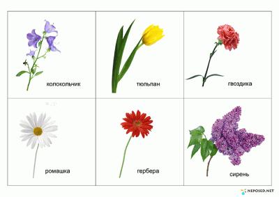 задания и игры на тему цветы | Edukacja wczesnoszkolna ...