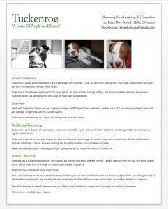Pet Resume Help Renting With A Dog Resume Examples Resume Sample Resume