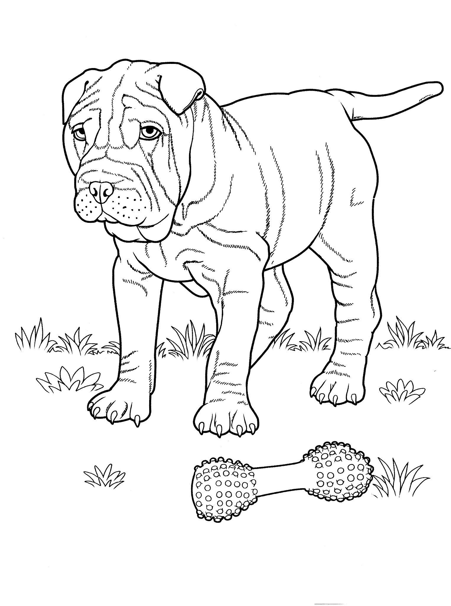 Ausmalbilder Tiere Hunde : Dog_coloring_pages_2 Teenagers Coloring Pages Favorite Dog