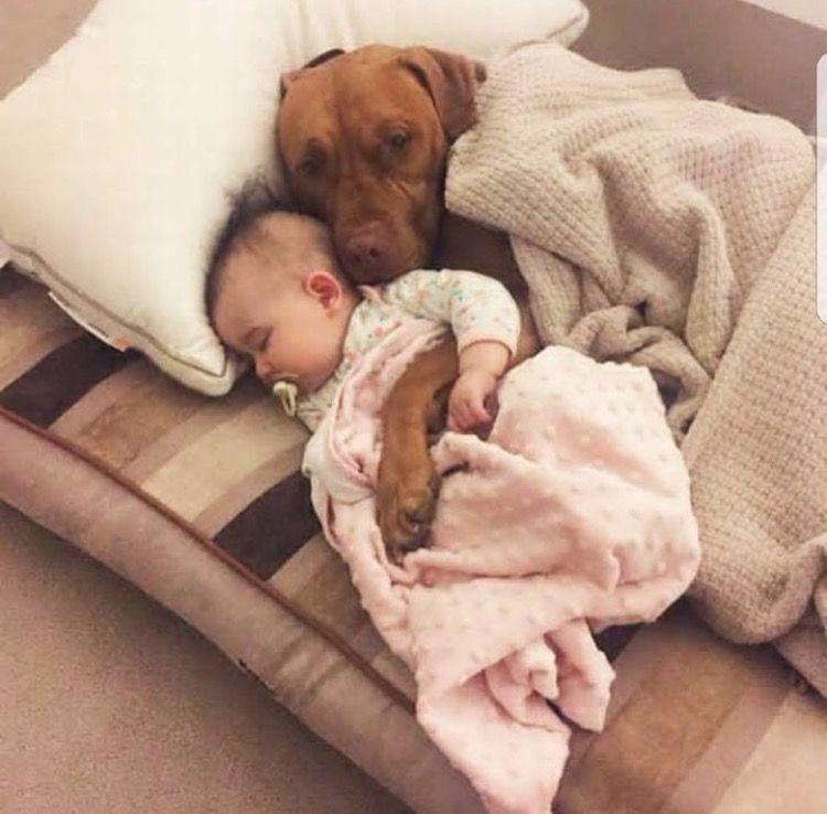 Картинки по запросу baby cuddling with dog