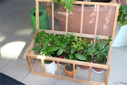 Mini Gewachshaus Mini Gewachshaus Pflanzen Gewachshaus