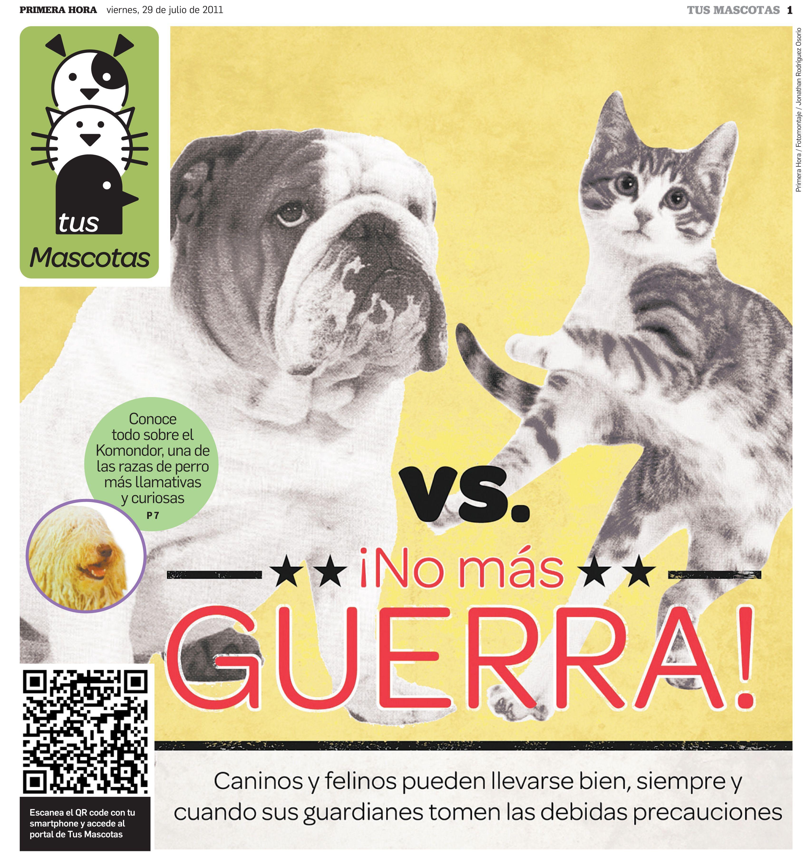 ¿Guerra entre perros y gatos? Con la ayuda de sus guardianes, estos animales pueden establecer una tregua para una feliz coexistencia.