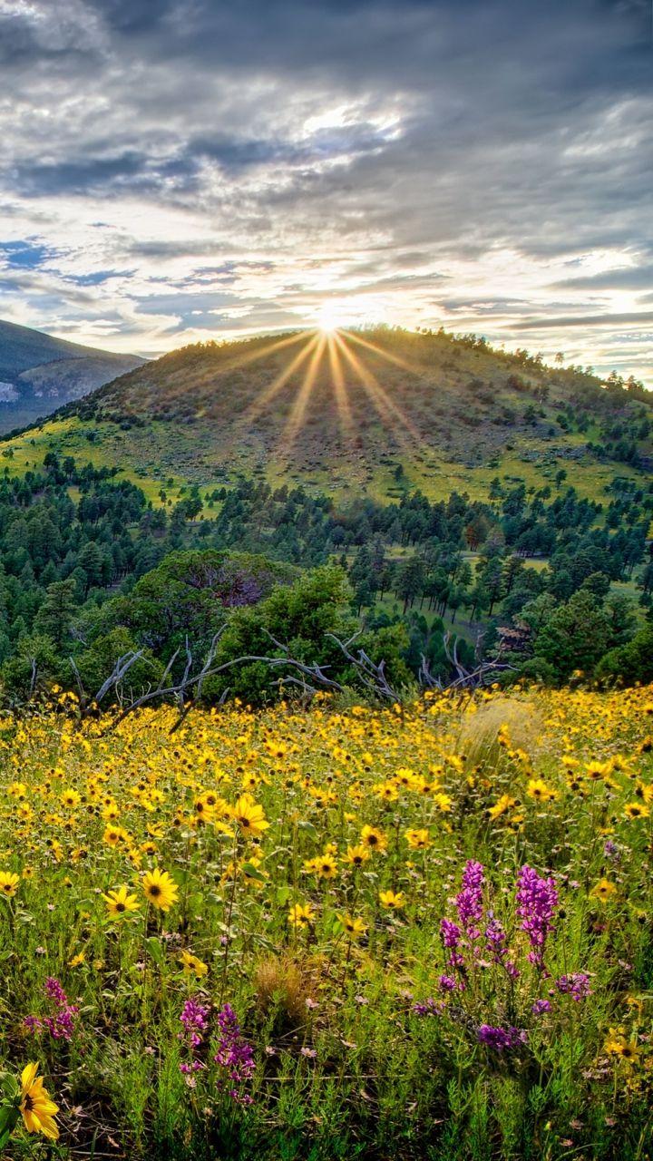 Top Wallpaper Mountain Flower - 19bd7222f3f8f40ed3d3208500294fe7  HD_51671.jpg