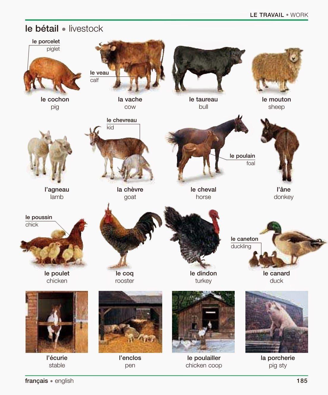 Extraordinaire les animaux de la ferme | anglais cp | Pinterest | Animaux de la  XS87