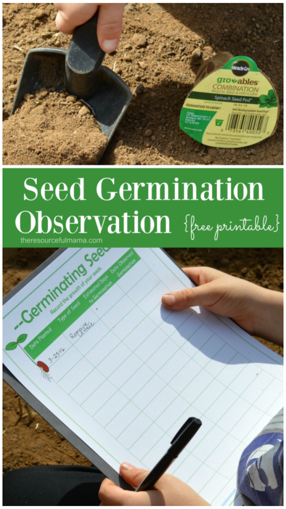 Seed Germination Observation for Kids {Free Printable} | The