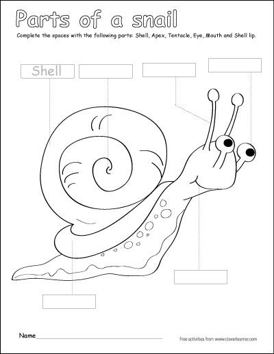 Label And Color The Parts Of The Snail Activity For Preschoolers