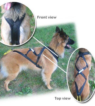 Harness Comparison Dog Sledding Dog Harness Dogs
