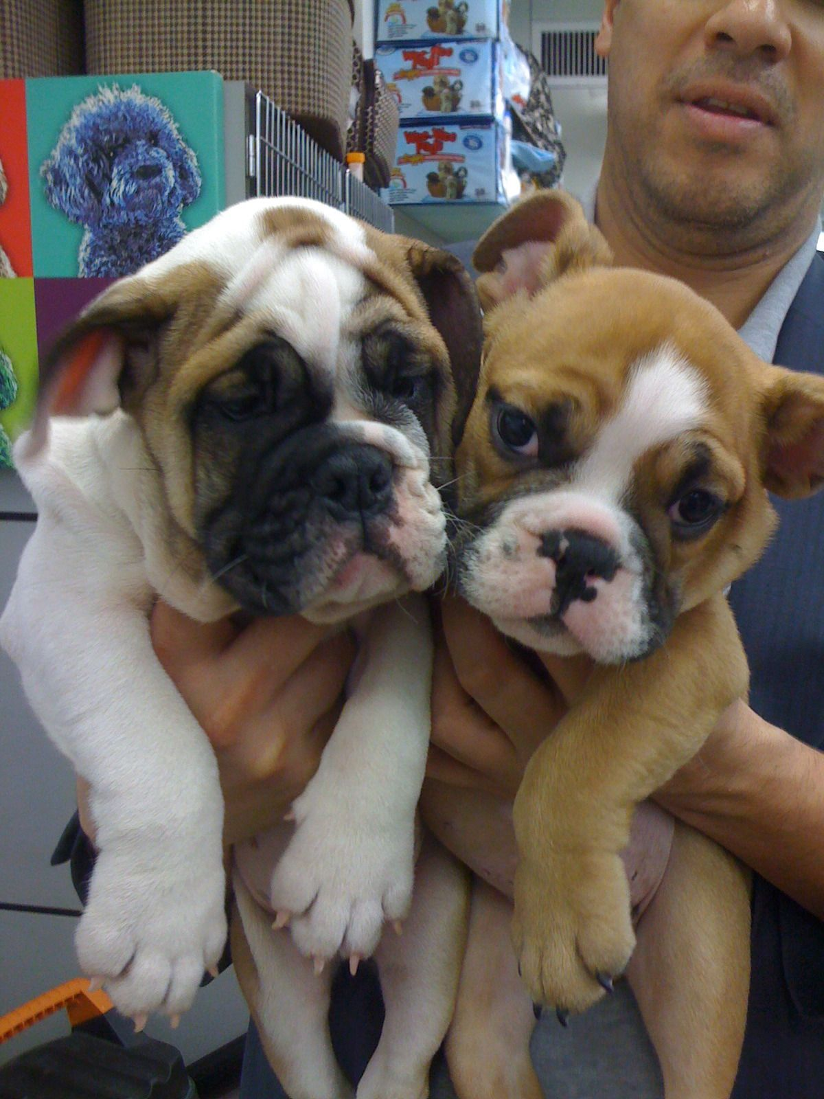 How Cute Are We Thedogstore Nyc My Amazing Patients Bulldog