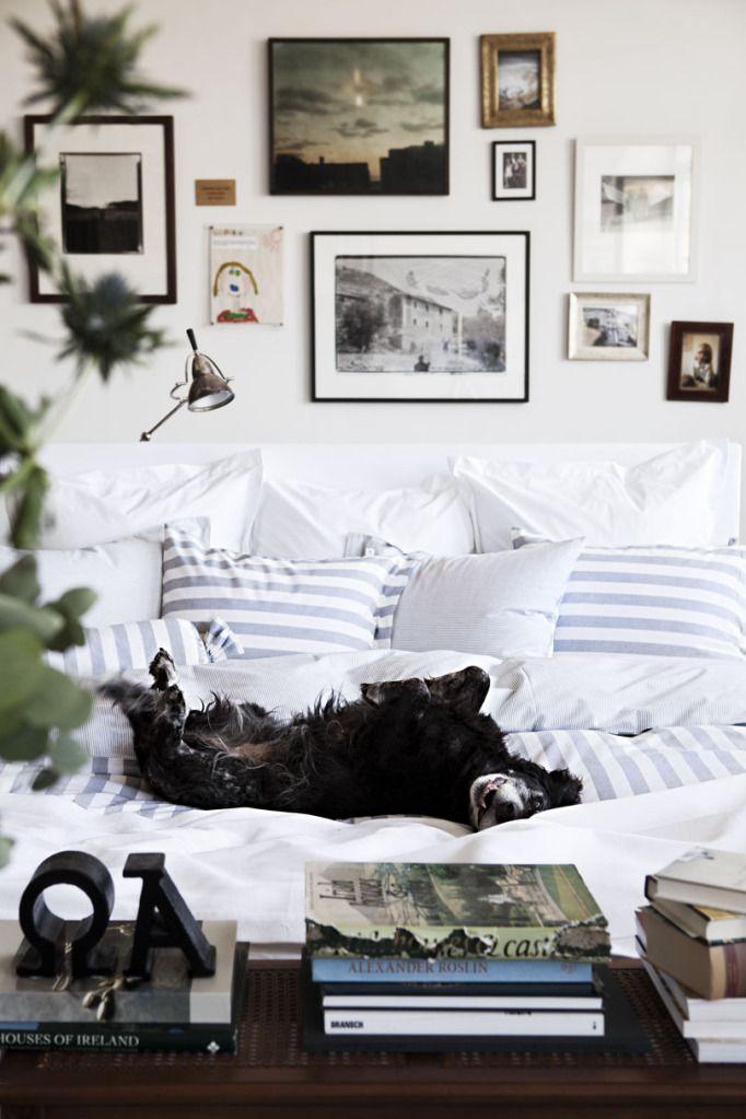 interior design stripes dog