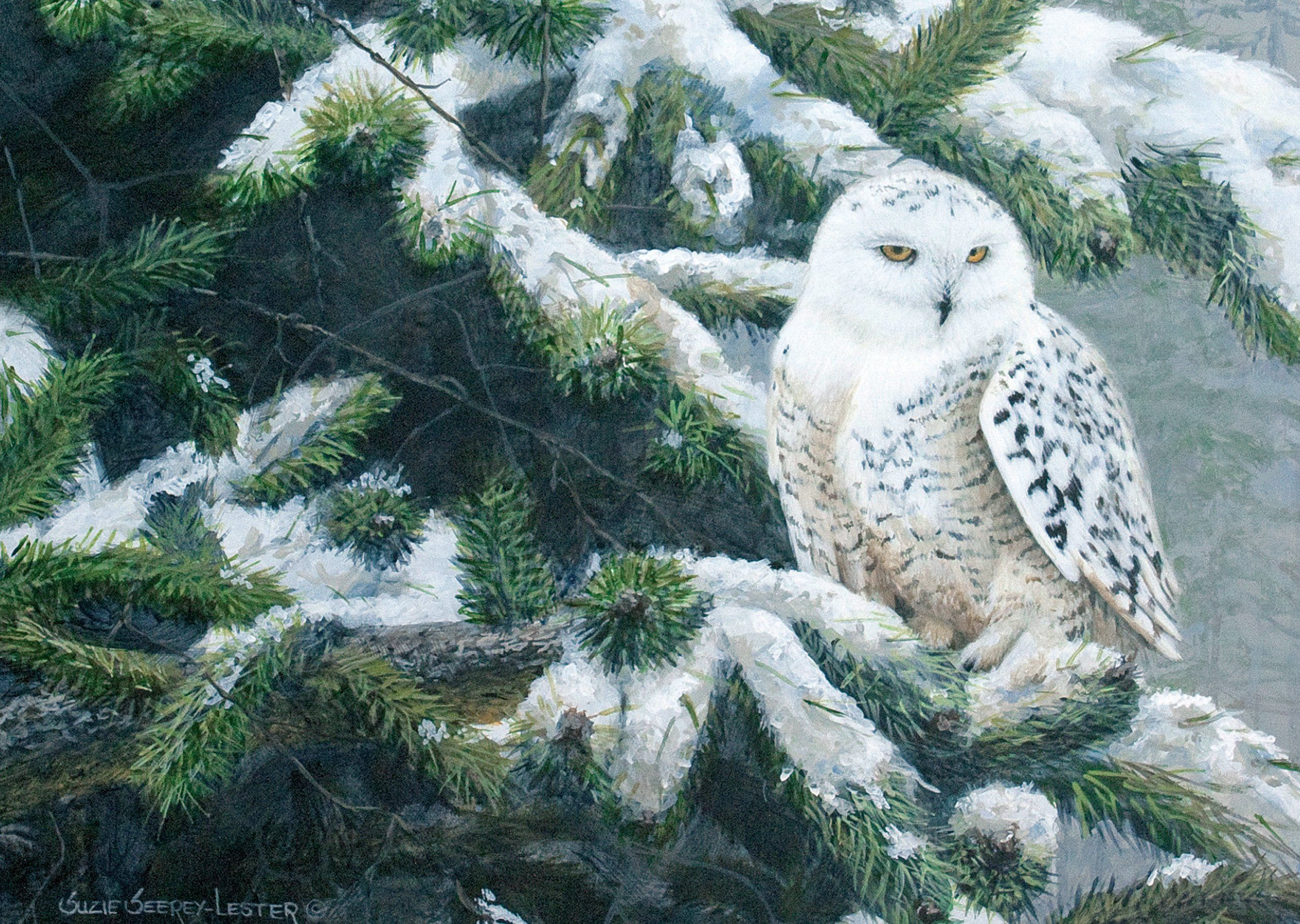Owl in Winter Large Boxed Holiday Cards (Christmas Cards