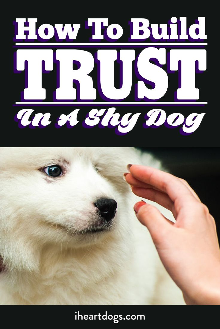 How To Build Trust In A Shy Dog Dog Training Puppy Training Dog Training Obedience
