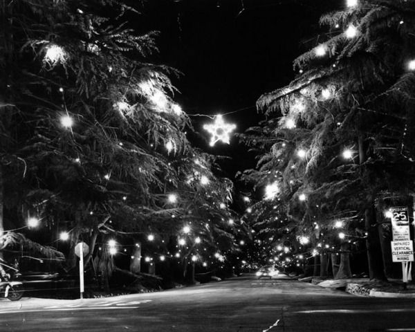Christmas Tree Lane The Origins Of A Southern California Tradition Pictures Christmas Past Mid Century Christmas