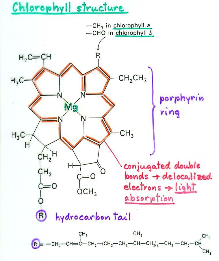 light shifts in the alkali atoms pdf