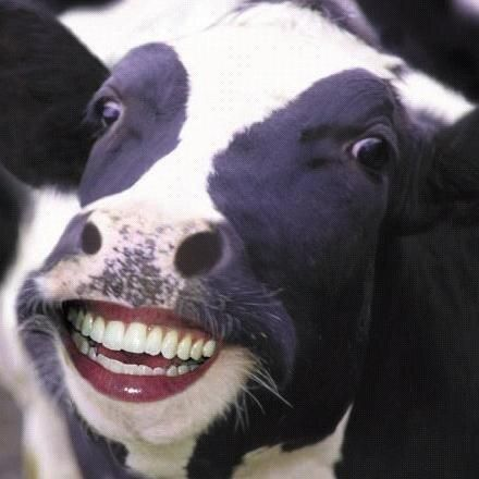 Waarom is Goofy dating een koe speed dating in Hampton VA