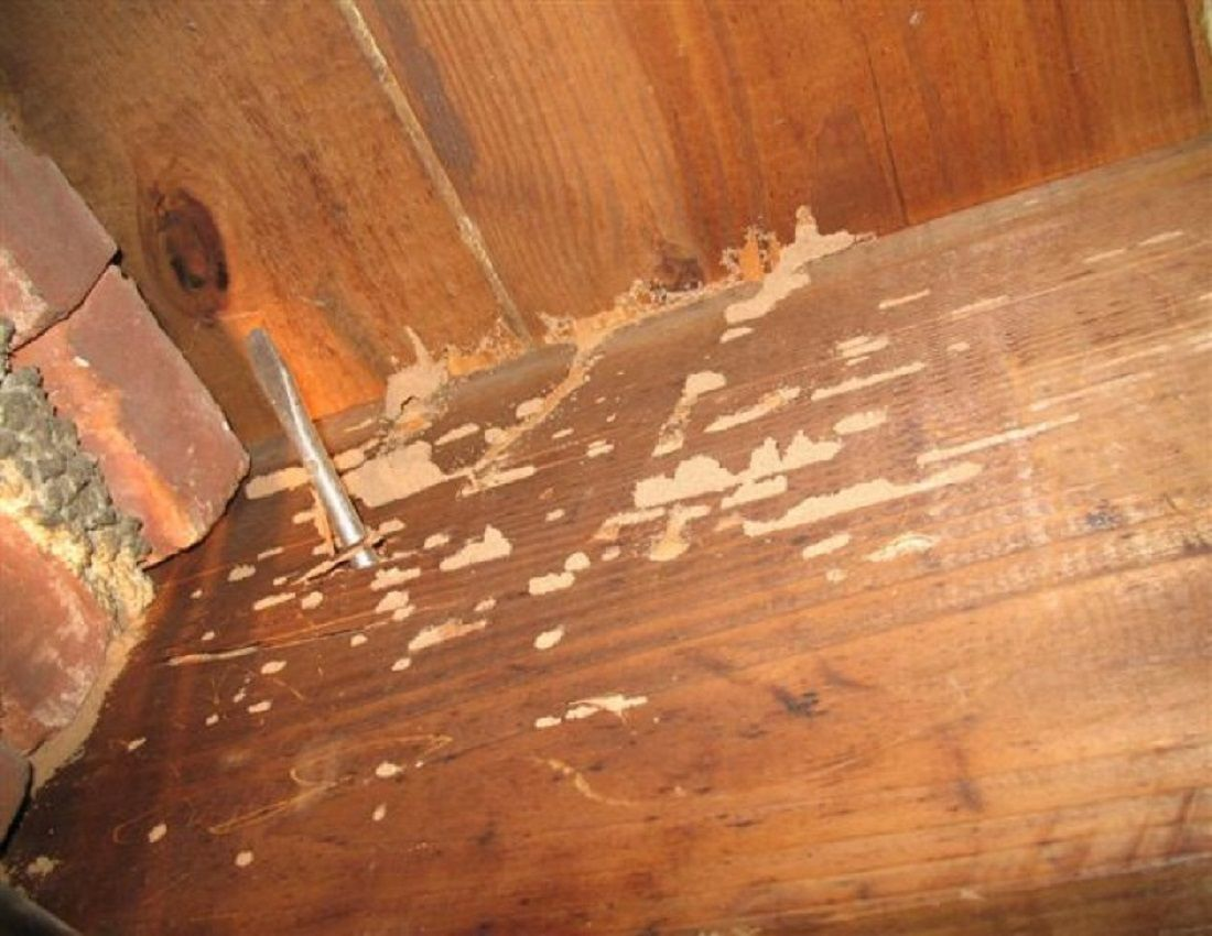 How To Get Rid Of Termites In Wood Furniture Best Modern Furniture Check More At Http Searchfororangecountyhomes Co Termites Wood Termites Drywood Termites