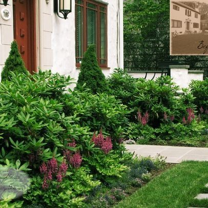 English garden foundation plants rhododendron astilbe for Foundation planting plans