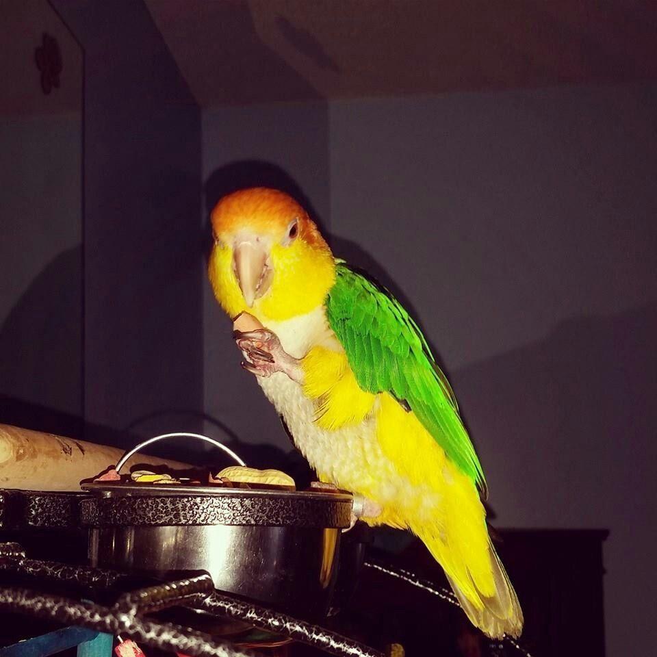 """Ziki says """"mmmmm,peanuts!"""""""