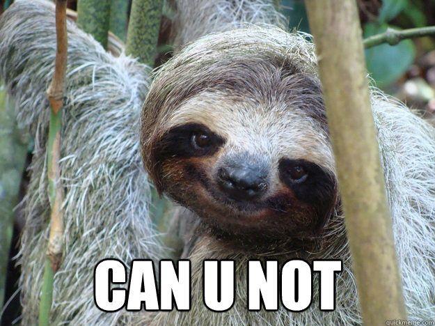 sloth memes - Google Search | Hahaha! | Funny, Memes ...