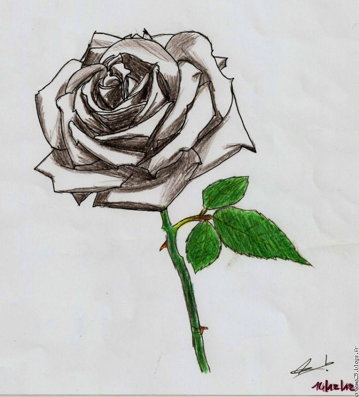 Resultat De Recherche D Images Pour Dessin De Rose Noir Et Blanc