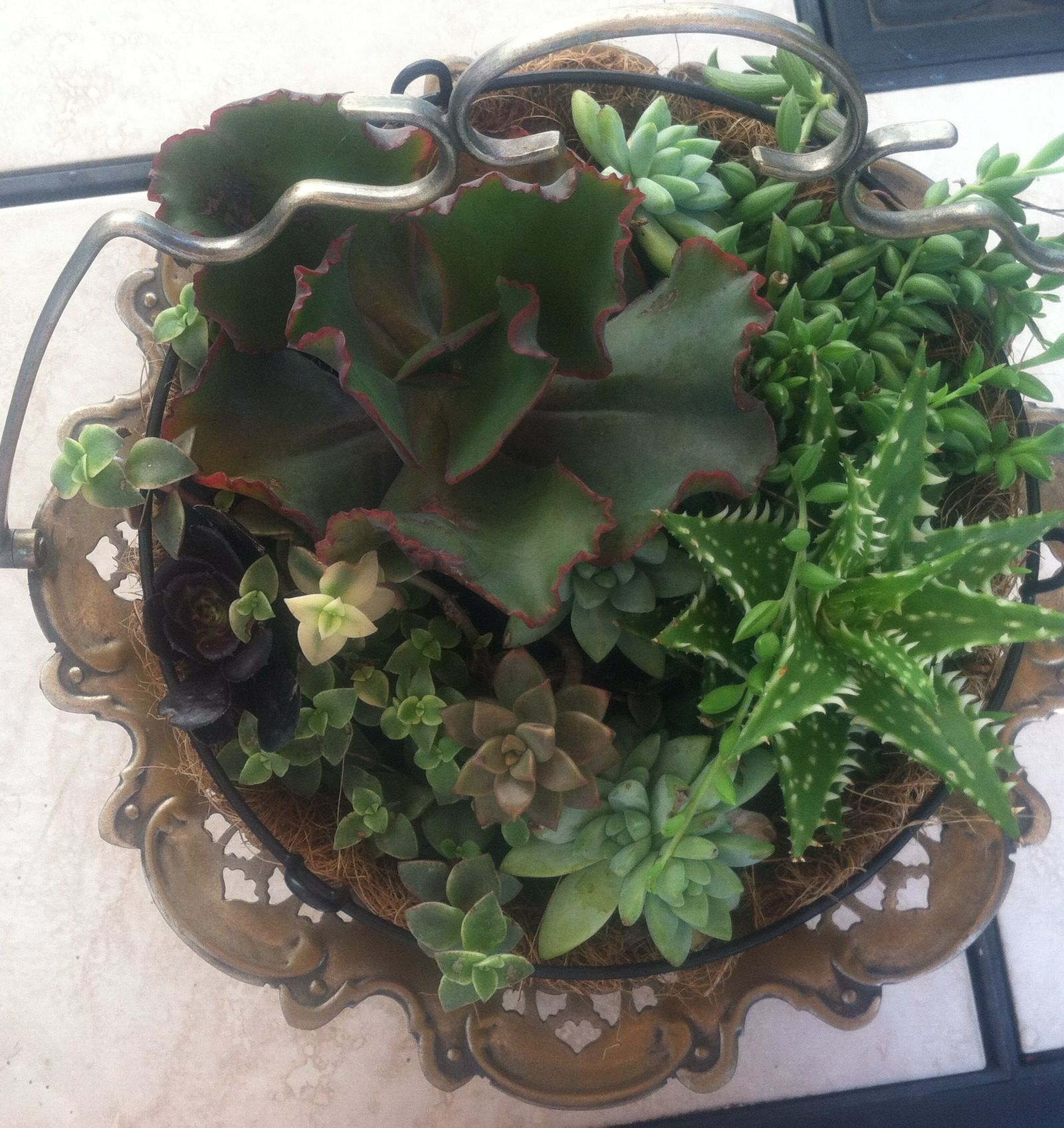 Love my succulents