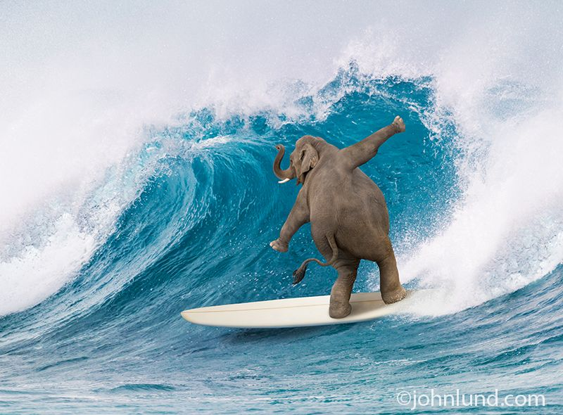 Hilarious Elephant And Pachyderm Pictures Funny Elephant Elephant Pictures Animal Antics