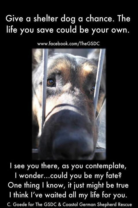 Pin By Shayna On Animals Animal Advocacy Shelter Dogs Dog Rescue Shelters Pets