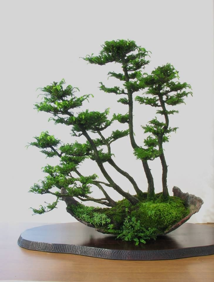 Bonsai Amazing Huge Bonsai By Master Of Obara School Bonsai Forest Bonsai Tree Bonsai Art