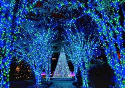 atlanta botanical garden light display