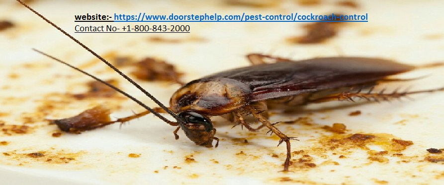 Cockroaches Pest Control Services In Delhi Safe Easy Cockroach
