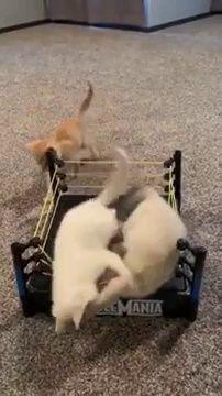 Kittens and $2 thrifts store find = Priceless #Katzen #thriftstorefinds