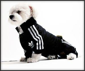 tienda de liquidación amplia selección de colores y diseños distribuidor mayorista Dog Tracksuit | Cute dog clothes, Dog wear, Dogs