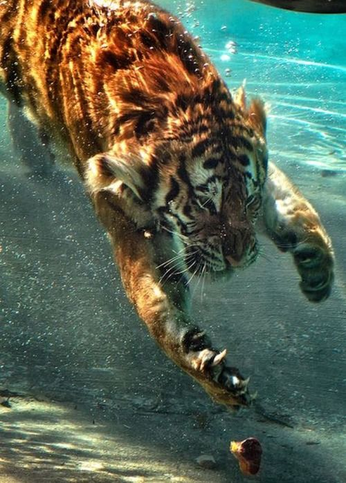 Pin By M E On Big Cats Tiger Wilde Tiere Tiere