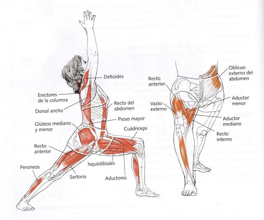 virabhadrasana I. Músculos | Yoga | Pinterest | Músculos, Yoga y ...
