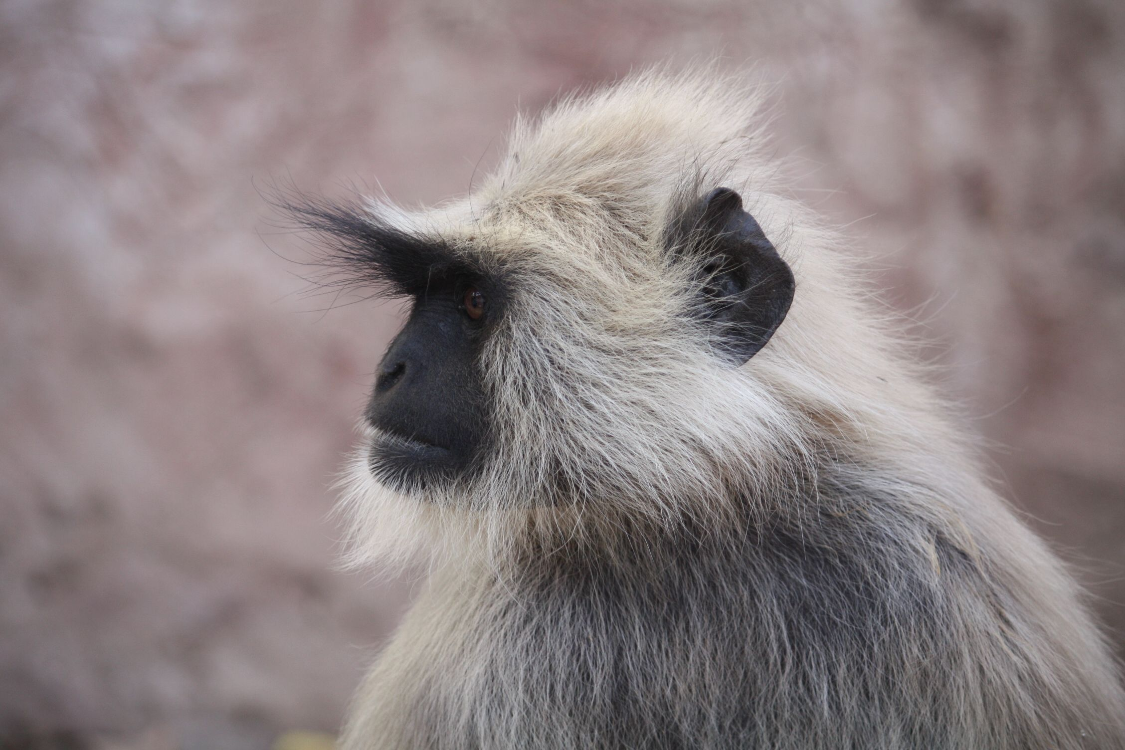 the excitement start with a monkey...those of you who know Ranthambore, will know what this means ;-P