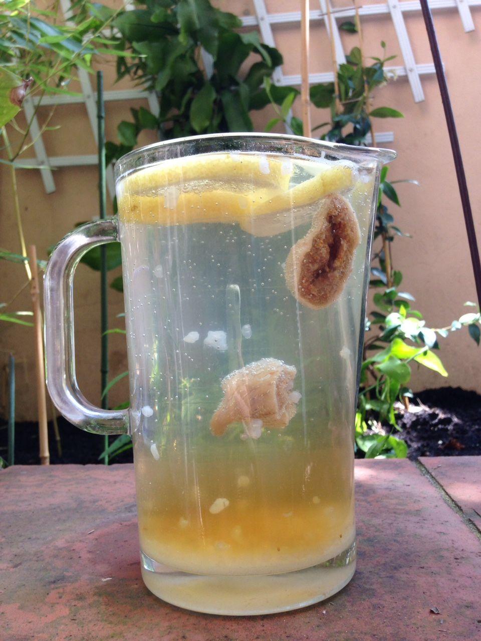 Le k fir de fruits la boisson vivante hummmm une for Plante kefir