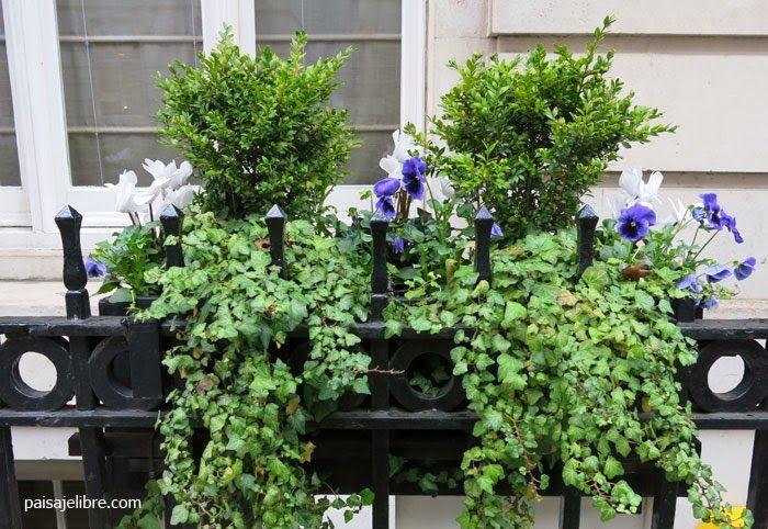 Paisaje libre composiciones de plantas para jardineras en for Jardineras para balcones