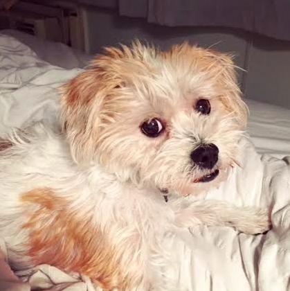 Adopt Daisy On Cat Adoption Dog Love Dog Adoption