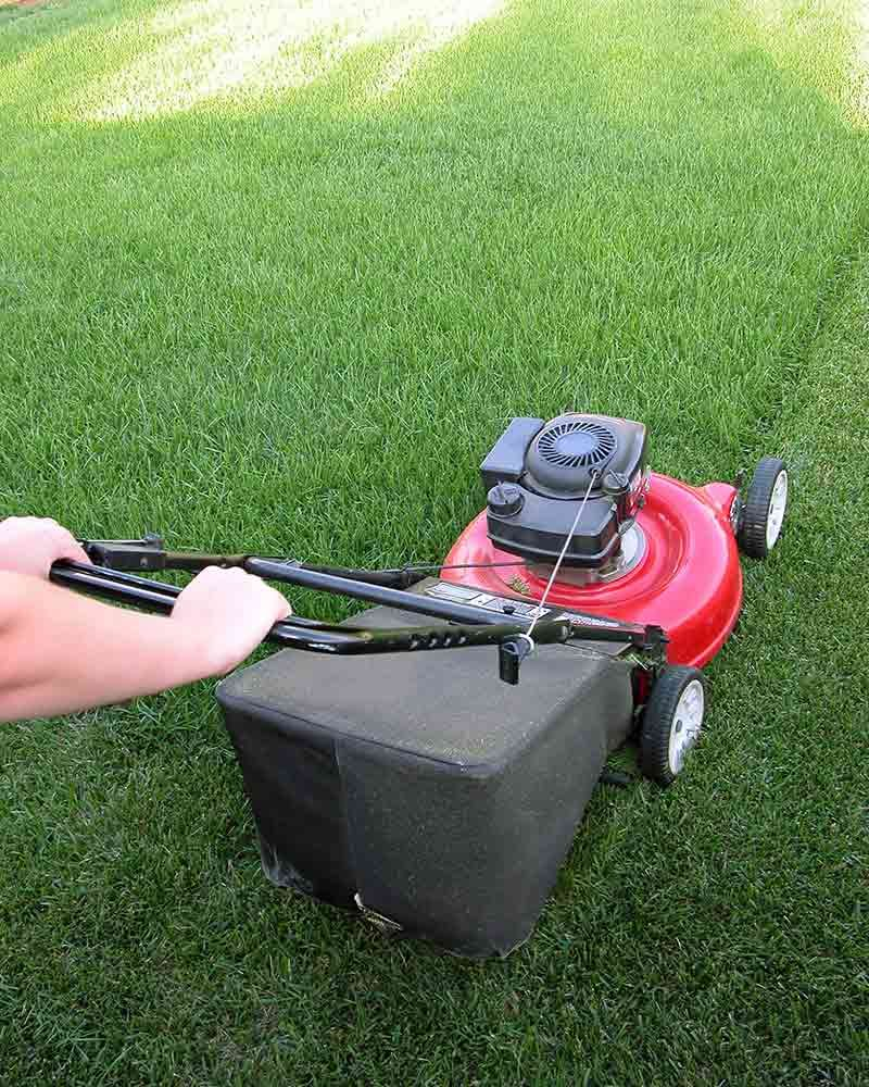 How to Overseed or Reseed Your Lawn