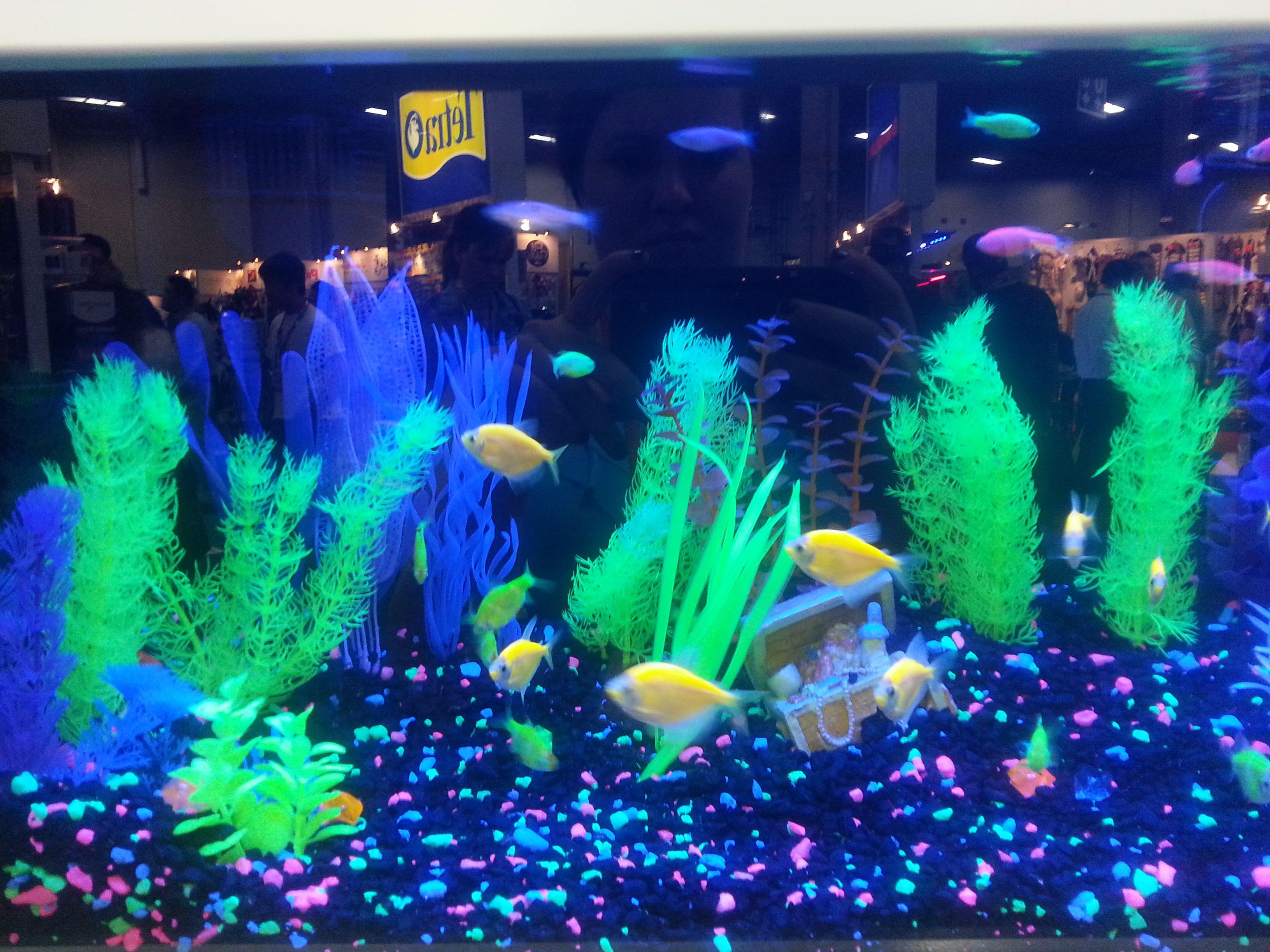 These Fish Really POP! #GloFish #fish #Tetra #aquarium