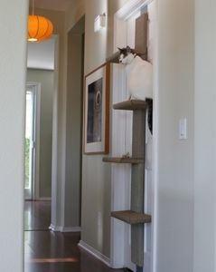 Door Climber $210 - pretty slick and simple looking...wish it would also mount to a wall though :/