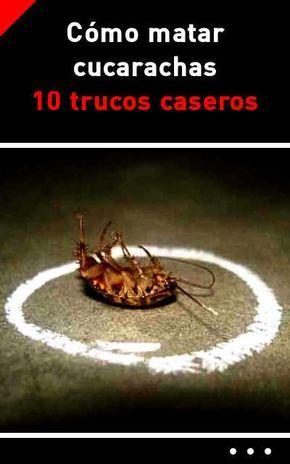 Como matar cucarachas 10 trucos caseros proyectos que - Como matar las moscas de mi casa ...