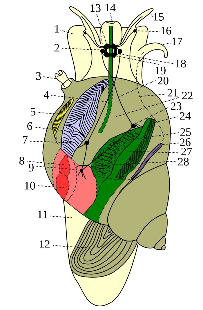 Anatomy of an Aquatic Snail | Monster Reference Board | Pinterest ...